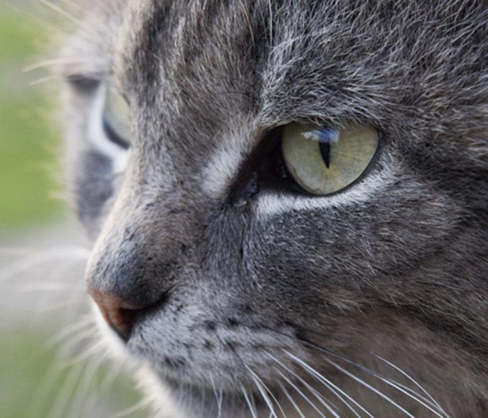 """Gatos, unos animales """"de bigotes"""""""