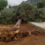 Valdepeñas registró ayer varias incidencias por viento huracanado